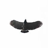 Barred Hawk - Leucopternis princeps
