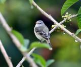 ecuador_birds_needing_ids