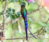 Ecuador Hummingbirds
