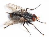 Xanthophyto sp.