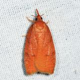 3722 - Chokecherry Leafroller - Cenopis directana