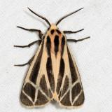 Moths October