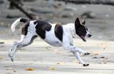 Muppy running around on the beach