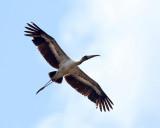 Costa Rica Wading Birds
