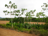 Wild garden along field