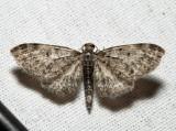 7491 - Eupithecia fletcherata (male)