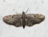 Eupithecia sp.23