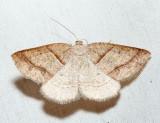 6804 – Northern Petrophora – Petrophora subaequaria