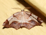 6838 - Friendly Probole - Probole amicaria