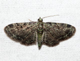 7625 - Green Pug - Pasiphila rectangulata