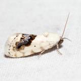 9095 – Small Bird-dropping Moth – Ponometia erastrioides