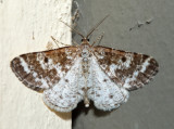 6639 - Sharp-lined Powder Moth - Eufidonia discospilata (male)