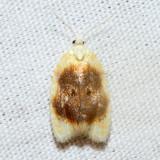 3503 – Oak Leaftier Moth – Acleris semipurpurana