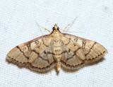 5182 – Hollow-spotted Blepharomastix – Blepharomastix ranalis