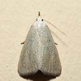 8522 – Gabara subnivosella