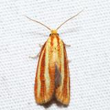 3699 – Three-streaked Sparganothis – Sparganothis tristriata
