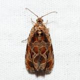 2795 – Basswood Olethreutes – Olethreutes tilianum