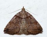8345 - Variable Zanclognatha Moth - Zanclognatha laevigata