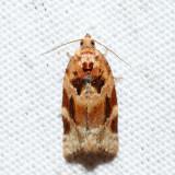 3597 – Red-banded Leafroller – Argyrotaenia velutinana