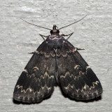 8334 – Glossy Black Idia – Idia lubricalis
