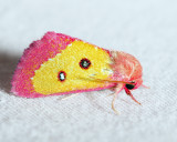 Moths July 2015/16