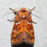 Moths September