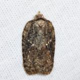 3539 - Lesser Maple Leafroller - Acleris chalybeana *