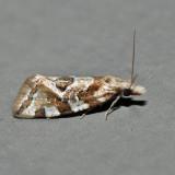 3754 - Angular Aethes - Aethes angulatana *