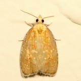 3504 – Blueberry Leaftier Moth – Acleris curvalana 7.3.6