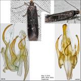 2189 - Aroga epigaeella