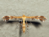 6102 – Dejongia lobidactylus 7.5.19