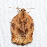 3658 - Omnivorous Leafroller - Archips purpurana 7.20.6