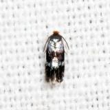 0059 - Glaucolepis saccharella 7.21.9