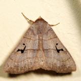 8588 - Brown Panopoda - Panopoda carneicosta