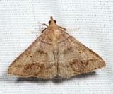 8384.1 - Yellow-spotted Renia - Renia flavipunctalis