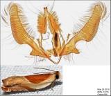 3369 - Ancylis fuscociliana