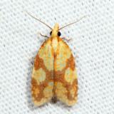 3695 - Sparganothis Fruitworm - Sparganothis sulfureana