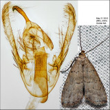 Moths Identified with Genitalia Pictures (7649-8769)