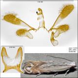 2227 - Battaristis nigratomella IMG_3995.jpg