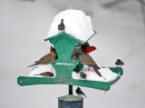 Busy feeder during a snow storm