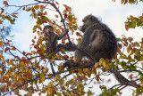 Baby Baboon - Kruger South Africa