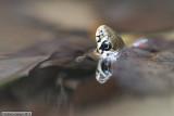 Grass snake - Natrice dal collare - Ringelnatter - Natrix natrix