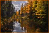 85 - Sawbill Trail:  Late Autumn Tamarack Reflections In Swanson Creek
