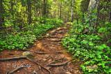 46 - Cascade Trail