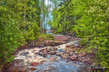 76.31 - Schroeder:  Last Creek Flowing Towards Lake Superior