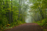 83.3 - Sawtooth:  Very Early Autumn Fog, Maple Leaf Drive (Wide View)