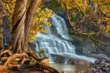 16.2 -  Gooseberry Cedars At Middle Falls, Autumn