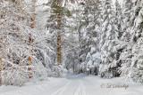 58.12 - Winter: Snow-Covered Lane