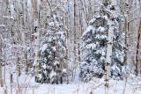 Winter: Wisconsin Woods