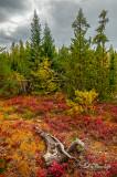 105.44 - Sawbill Trail:  Autumn Landscape